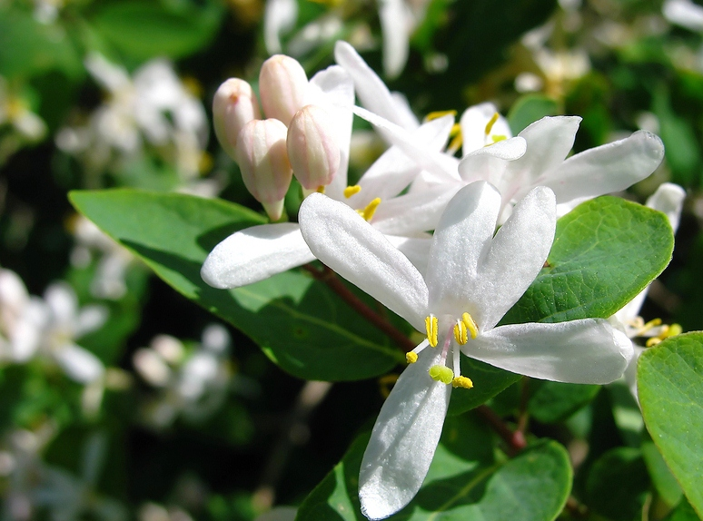 honeysuckle motivation for spring workout