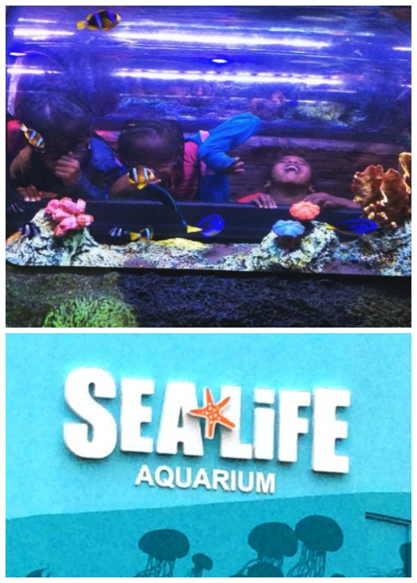 Our visit to sea life aquarium in concord mills Concord mills mall aquarium
